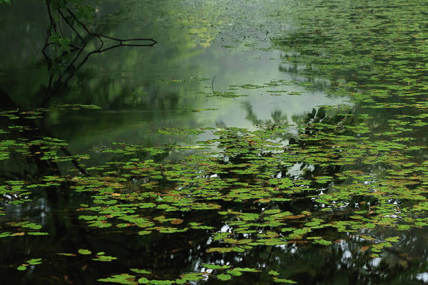 Photograph - Moonlight Blues - Quiet Pond Covered by Yuko Yamada