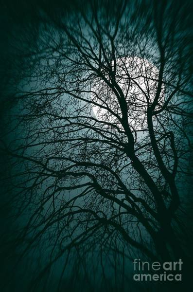 Wall Art - Photograph - Moonlight Forest by Carlos Caetano