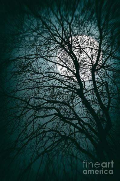Gloomy Wall Art - Photograph - Moonlight Forest by Carlos Caetano