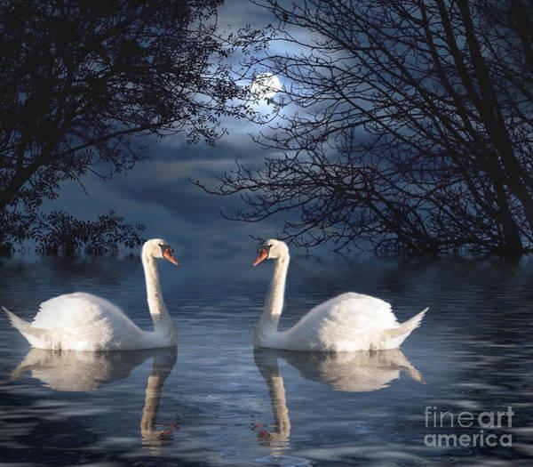 Wall Art - Photograph - Moonlight Swim by Juli Scalzi