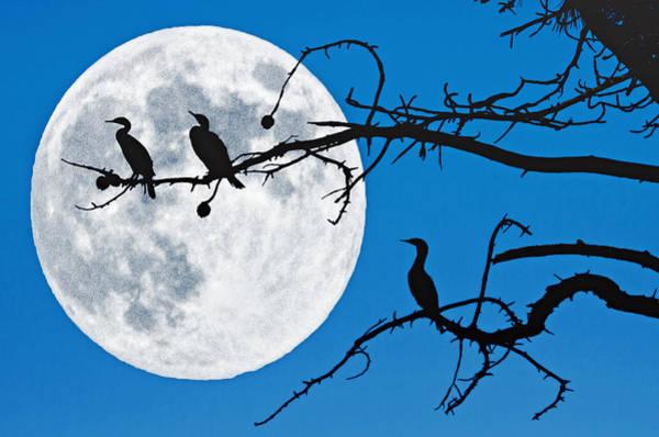 Moonlit Cormorants Art Print by Donna Pagakis