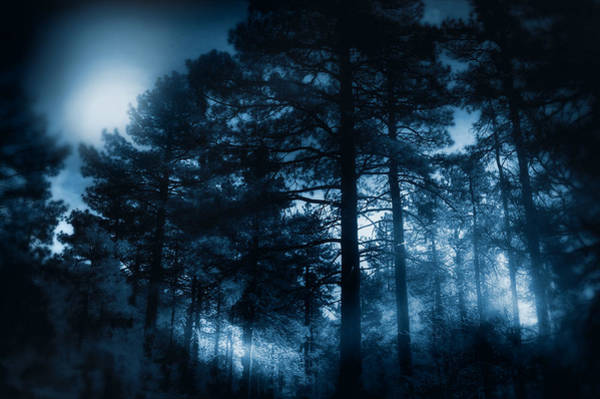 Photograph - Moonlit Night by Douglas MooreZart