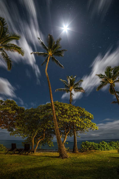 Photograph - Moonlit Palm Trees by Pierre Leclerc Photography