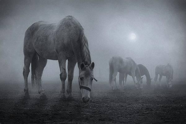Moonlit Wall Art - Photograph - Moonlit by Samuel Malach