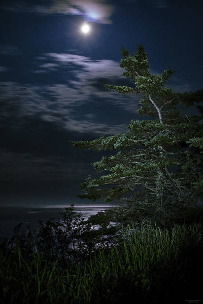 Wall Art - Photograph - Moonlit Treescape by Marty Saccone