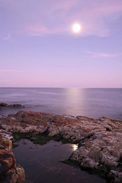 Photograph - Moonrise In Acadia National Park by Juergen Roth