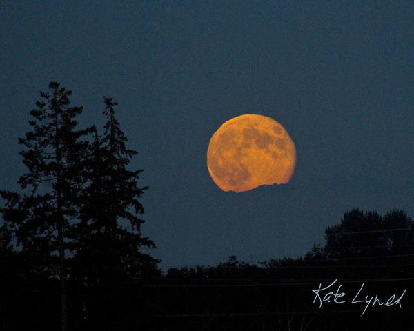 Photograph - Moonrise by Kate Lynch