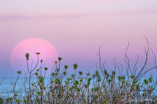 Moonrise Over Dunes Art Print