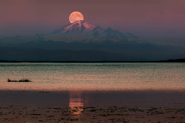 Photograph - Moonrise Over Mount Baker by Alexis Birkill