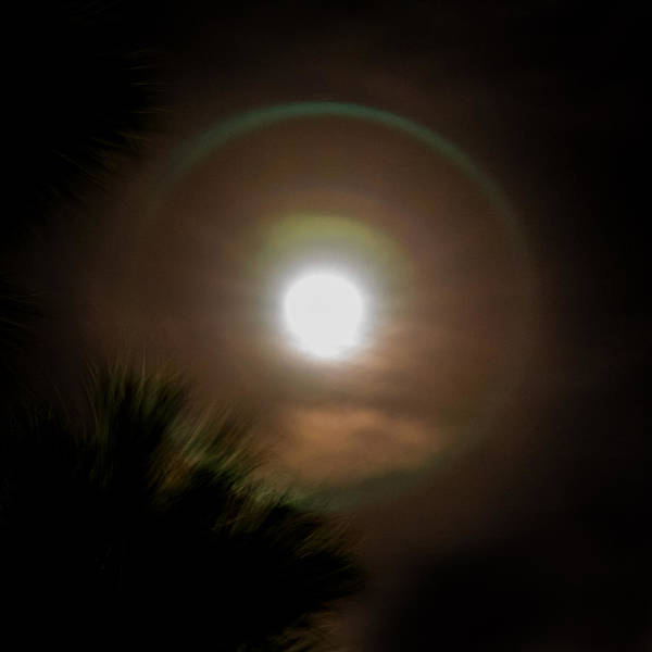 Photograph - Moonshine by Jody Lane
