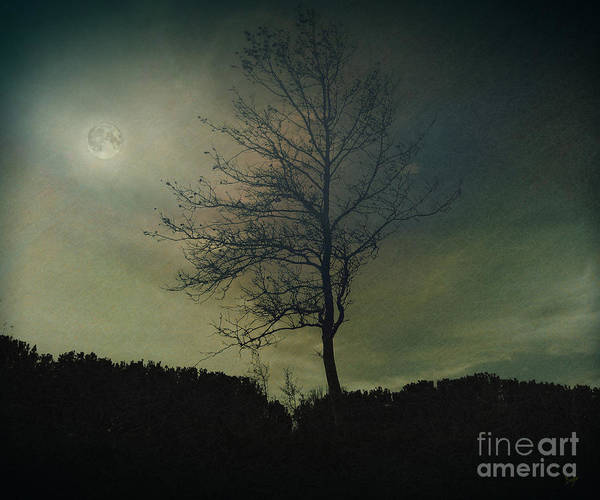 Digital Effect Photograph - Moonspell by Peter Awax