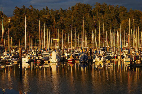 Photograph - Moored Sailboats by Jani Freimann