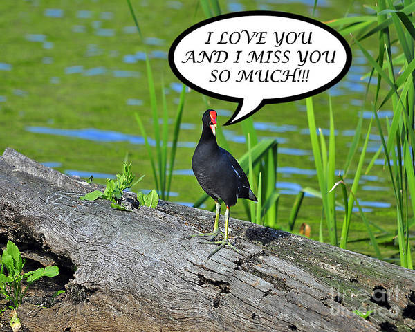 Miss You Photograph - Moorhen Miss You Card by Al Powell Photography USA