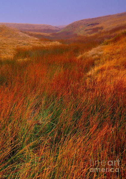 Photograph - Moorland Grasses - Yorkshire Dales by Martyn Arnold