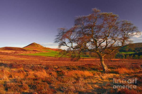 Moorland Tree North Yorkshire Art Print