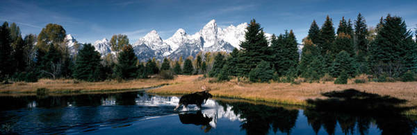 Evergreens Photograph - Moose & Beaver Pond Grand Teton by Panoramic Images