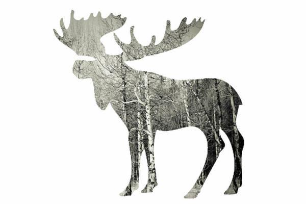 Fall Photograph - Moose by Amber Berninger