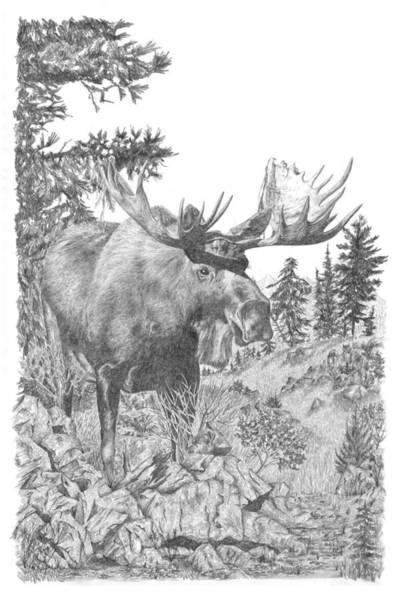 Elk Mountain Drawing - Moose by Andrew Aagard