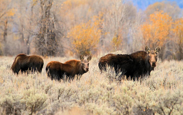 Wall Art - Photograph - Moose by Donna Kennedy