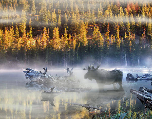 High Quality Photograph - Moose Lake by Leland D Howard