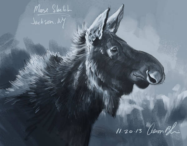 Wall Art - Digital Art - Moose Sketch by Aaron Blaise