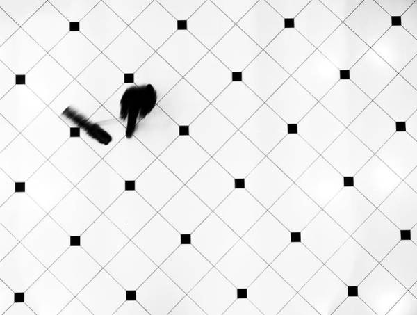 Grid Photograph - Mop by Ali Ayer