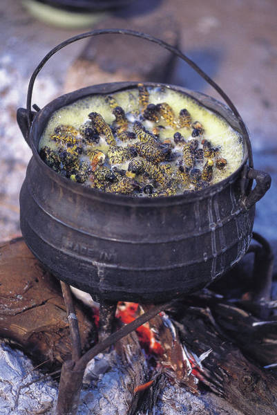 Larva Wall Art - Photograph - Mopane Worms Cooking In A Pot by Peter Menzel/science Photo Library