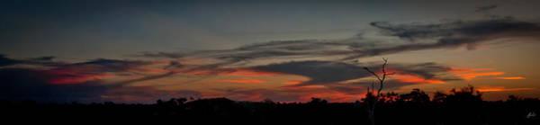 Wall Art - Photograph - Mopani Sunrise by Jason Lanier