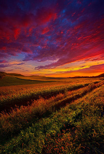 Photograph - More Than A Feeling by Phil Koch