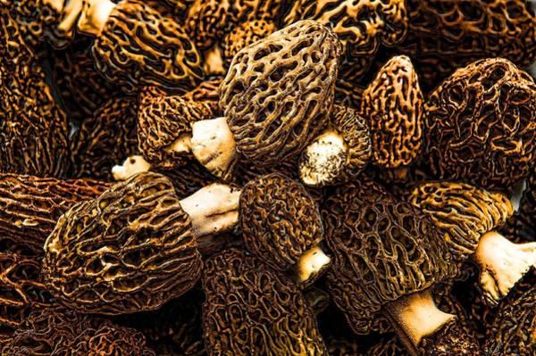 Shrooms Photograph - Morel by Don Bendickson