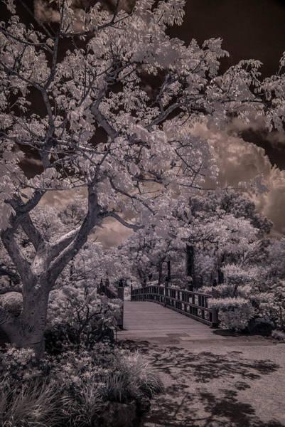 Pyrography - Morikami Gardens - Bridge by Ellie Perla