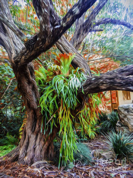 Photograph - Morikami Museum And Japanese Gardens Florida by Ginette Callaway