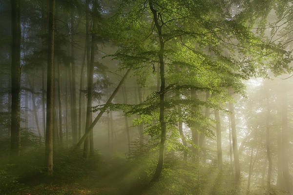 Sunbeam Photograph - Morning Beauty by Norbert Maier