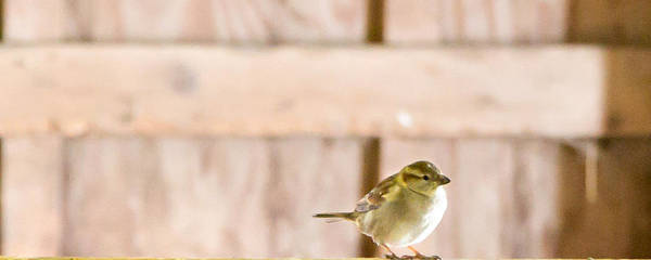 Chirping Photograph - Morning Bird by Courtney Webster