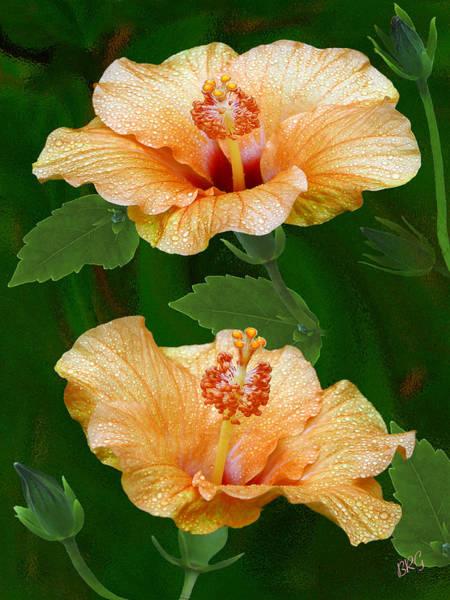 Photograph - Morning Blooms - Hibiscus by Ben and Raisa Gertsberg