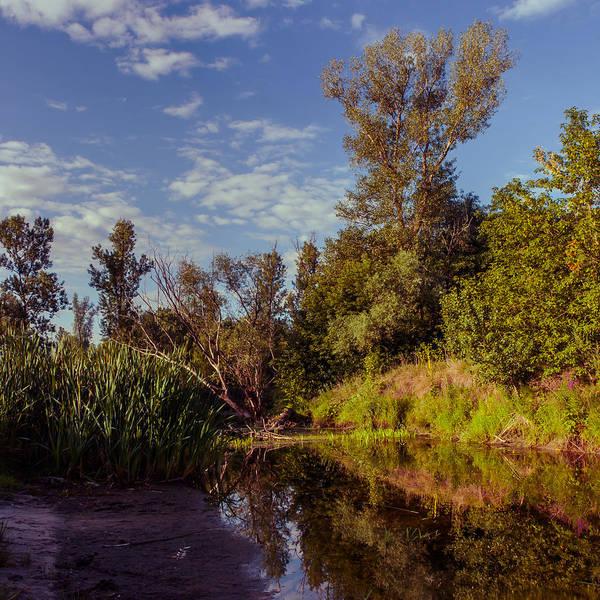 Photograph - Morning Creek by Dmytro Korol