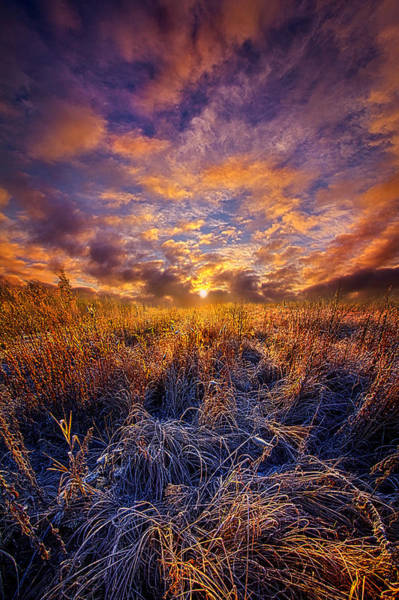 Photograph - Morning Dance by Phil Koch