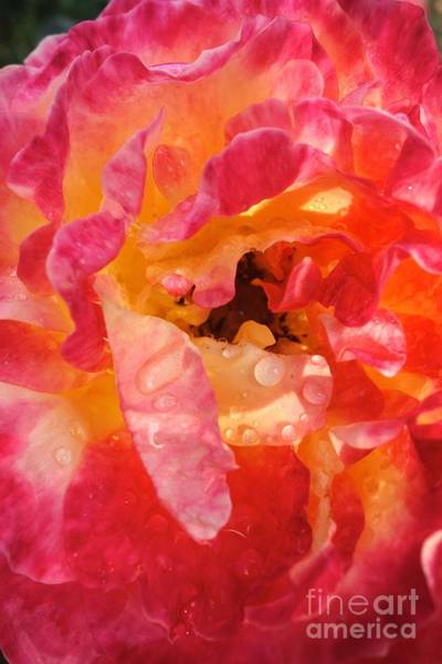 Photograph - Morning Dew #4 by Jacqueline Athmann