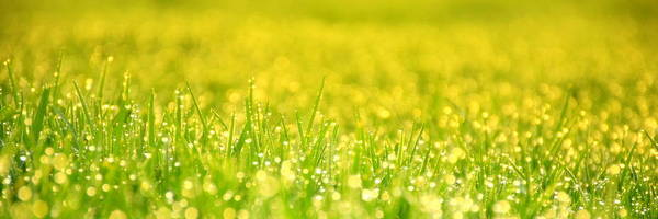 Brillante Photograph - Morning Dew In A Fresh Grass by HQ Photo
