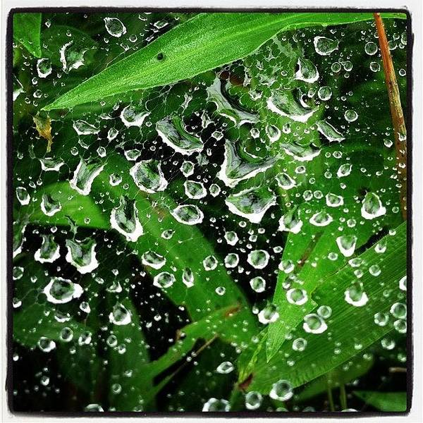 Element Wall Art - Photograph - Morning Dew by Maesrihomegallery Chiang Rai