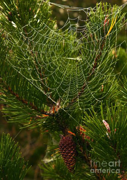 Morning Dew On Cobweb Art Print