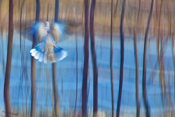 Poetic Photograph - Morning Dove by Theresa Tahara