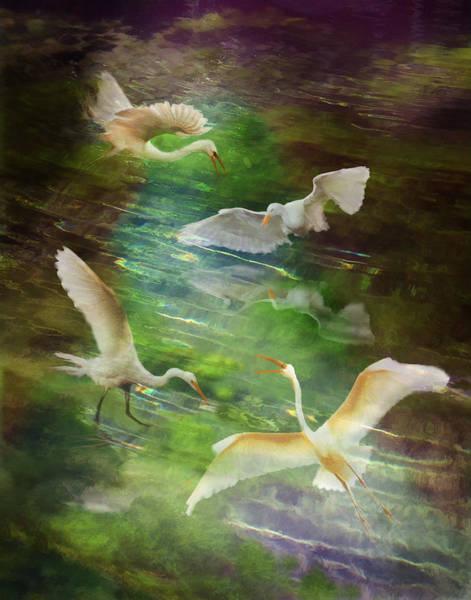 Photograph - Morning Fishing by Melinda Hughes-Berland