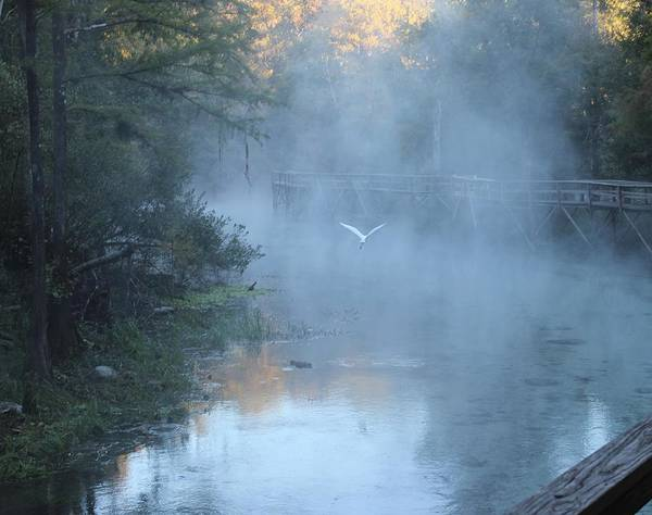 Wall Art - Photograph - Morning Flight by Charles Rogers