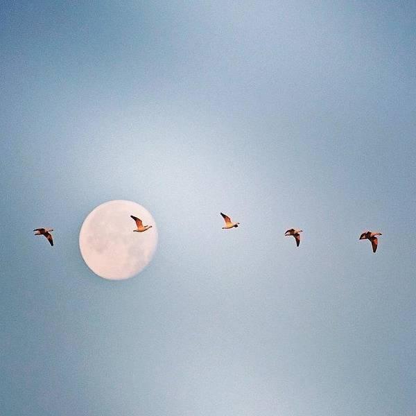 Wall Art - Photograph - Morning Flight #geese #nature #arkansas by Scott Pellegrin
