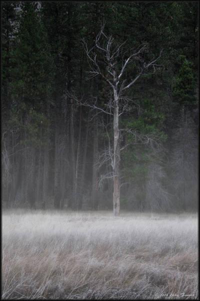 Photograph - Morning Fog by Erika Fawcett