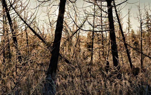 Photograph - Morning Forest Frost by Doug Gibbons