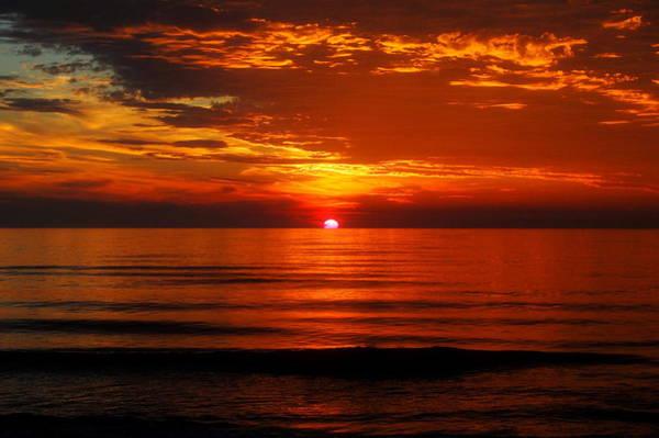 Corolla Photograph - Morning Glory by Mim White