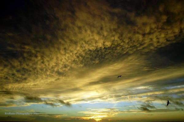 Rader Photograph - Morning Glory by Roe Rader