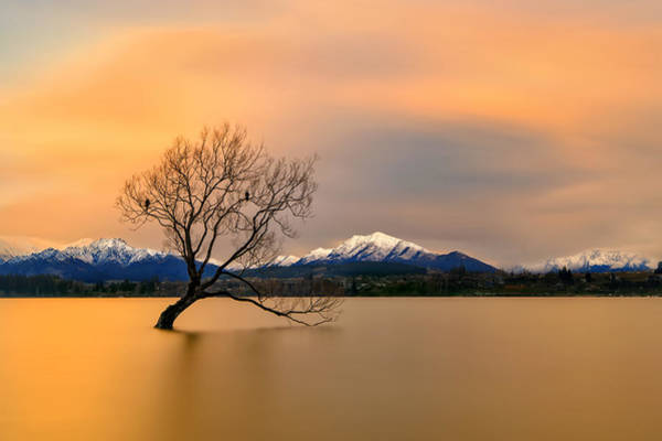 Lake Shore Wall Art - Photograph - Morning Glow Of The Lake Wanaka by Hua Zhu